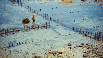 People collect seaweed plantations algal - Nusa Penida, Bali, Indonesia