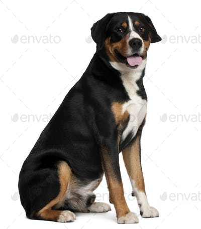 Mixed-breed dog, 5 years old, sitting in front of white background