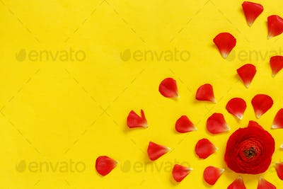 Red flowers and petals on a yellow background