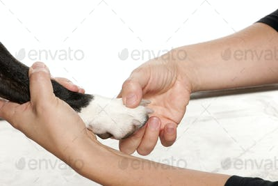 Hands holding a dog's paw in front of white background