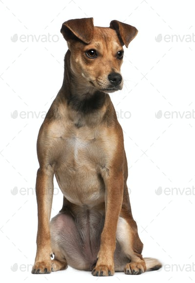 Mixed-breed dog, 7 months old, standing in front of white background