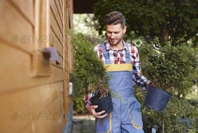 Male gardener holding flowerpot with seedling