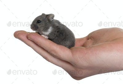 Mouse in a human hand in front of white background, studio shot