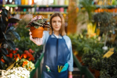 Gardener with flower and garden spray, shop