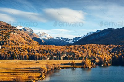 Autumn lake Sils in Swiss Alps