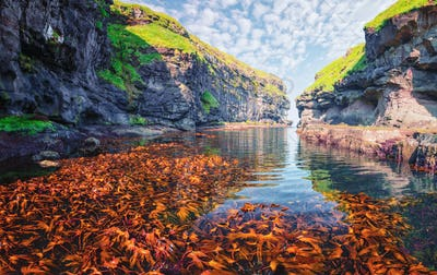 Beautiful view of dock with clear water and red seaweed
