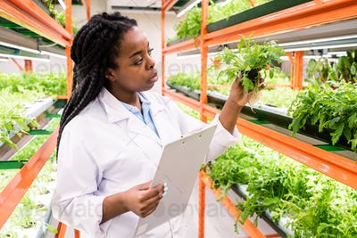 African female biologist with document standing by shelves with green seedlings