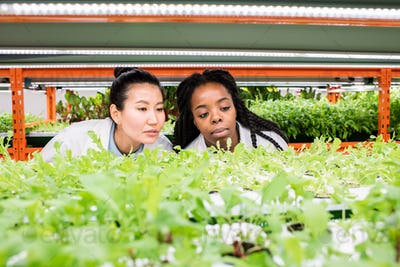 Young female biologists looking at green seedlings on shelf