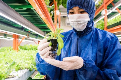 Young researcher of Asian ethnicity holding small pot with green seedling
