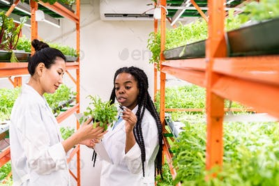 Young African agronomist pointing at green seedlings held by her Asian colleague