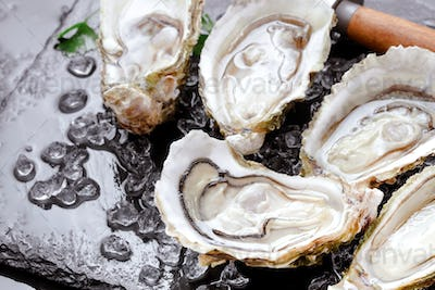 Set of opened oysters