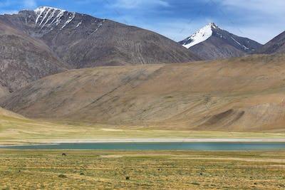 Himalayan lake Kyagar Tso in the afternoon. Korzok, Ladakh, India