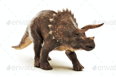 Triceratops on white