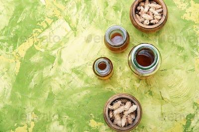 Pine kidneys in folk medicine
