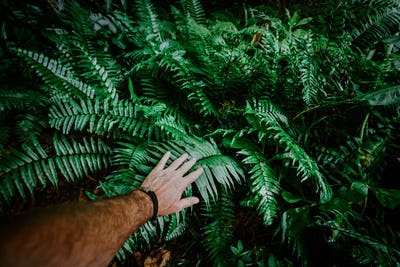 The man's hand touches green fern leaves. Adventure, discovery, exploring, ecology and