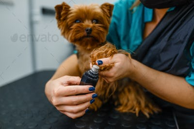 Female groomer polishing the claws of cute dog
