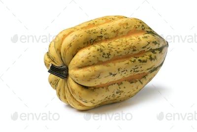 Fresh golden acorn squash close up