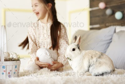 Fluffy rabbit eating hay in bed