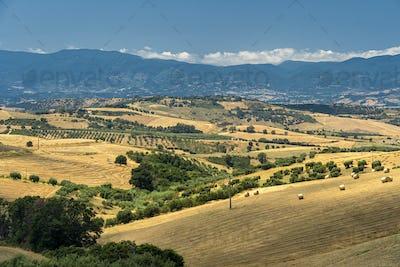 Summer landscape in Calabria, Italy, near Spezzano Albanese
