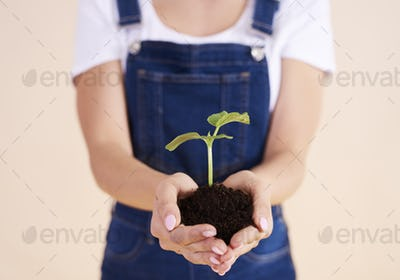 Close up of small plant in hands