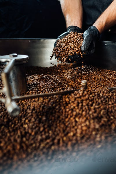 worker took Freshly roasted coffee to check the quality of mixer drum for cooling