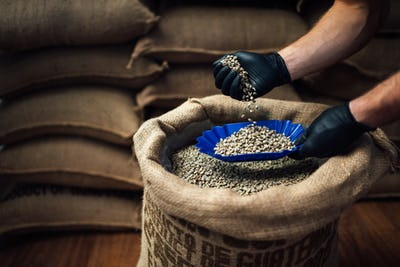 pouring coffee from a burlap bag into a bowl for tasting,