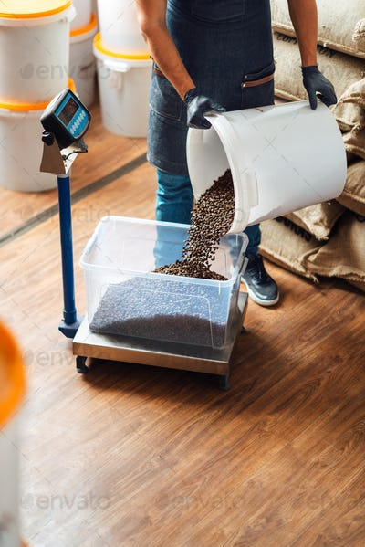 a worker pours roasted coffee beans from a bucket into a tray on a weighing scale