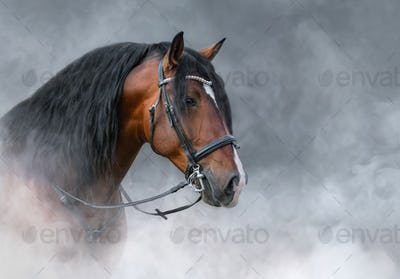 Spanish bay horse with long mane in light smoke.