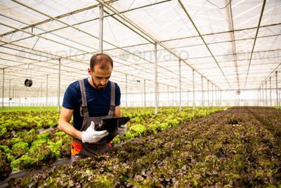 Worker in greenhouse with tablet in hand following something on screen
