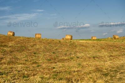 Summer landscape along the road to Camigliatello, Sila
