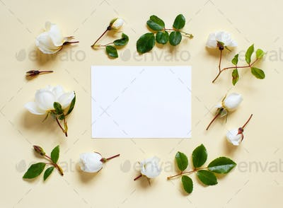Flowers and white papteron a light yellow background