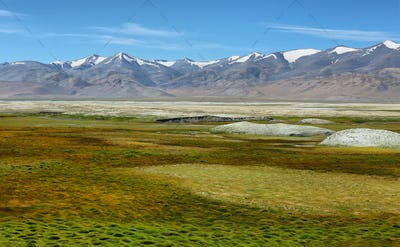 Landscape view of Tso Kar salty lake with wild ass at foreground in Ladakh, India