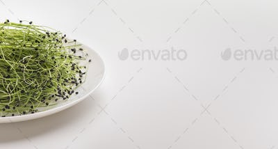 Fresh rare microgreens on plate over white background