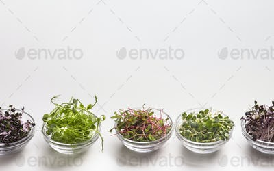 Collection of sprouted microgreens in small glass plates on white