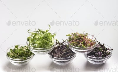 Assortment of fresh and healthy microgreens in plates on white