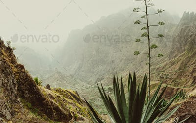 Close up of yucca plants and rocky mountains in background in Xo-xo valley in Santo Antao island