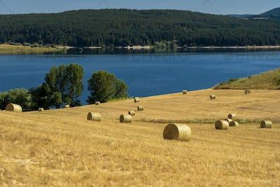 Summer landscape along the road to Camigliatello, Sila. Cecita lake