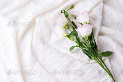 Flowers eustoma on white blanket background, flat lay copy space. Holiday concept