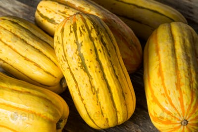 Raw yellow Organic Delicata Squash