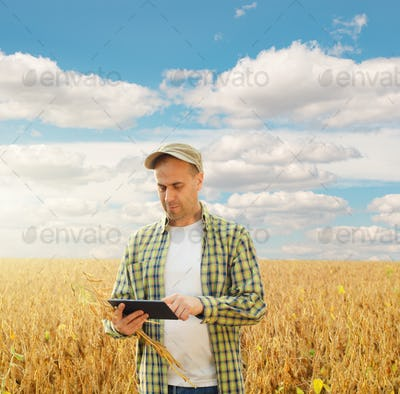 Caucasian middle age farmer uses tablet computer for inspecting soy at field