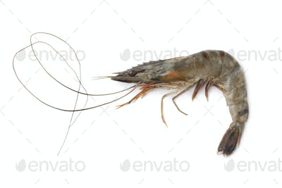 Whole single fresh black tiger shrimp