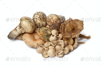 Different autumn mushrooms