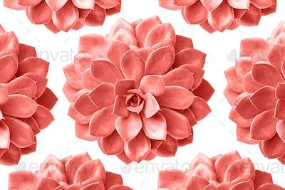 Pattern of succulent plant in living coral colour isolated on white