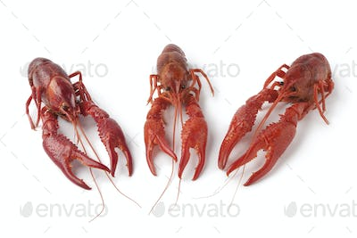 Cooked freshwater crayfishes