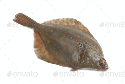 Whole single fresh raw plaice