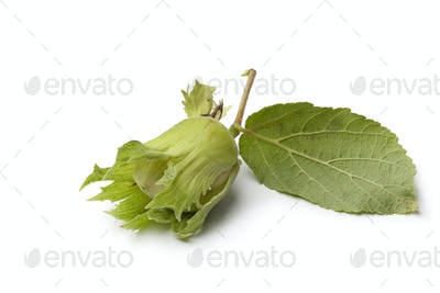 Fresh hazelnut and leaf