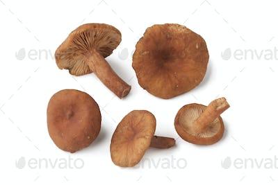 Candy caps mushrooms