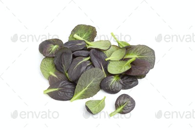 Fresh tatsoi leaves