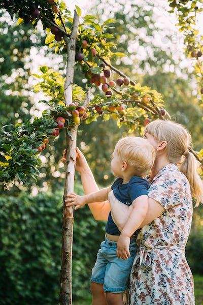Young Woman Mother Hugging Her Baby Son And Showing Him Apple Tree