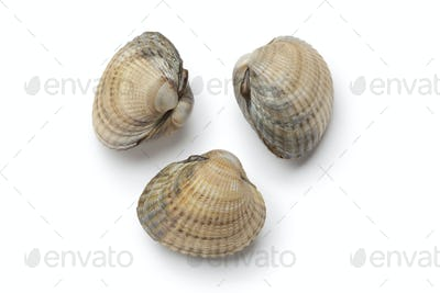 Cockles on white background